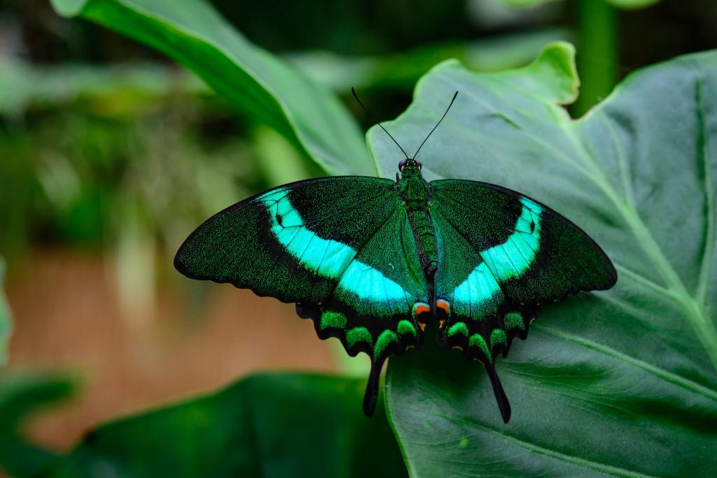 Jardin des Papillons │© Herman Pijpers