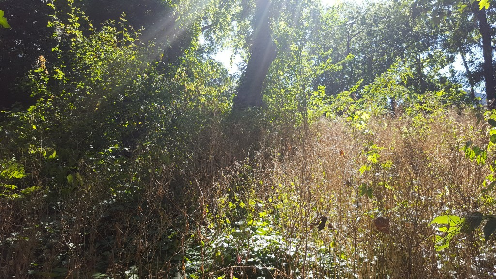 Jardin Sauvage Saint-Vincent │© pixeltoo