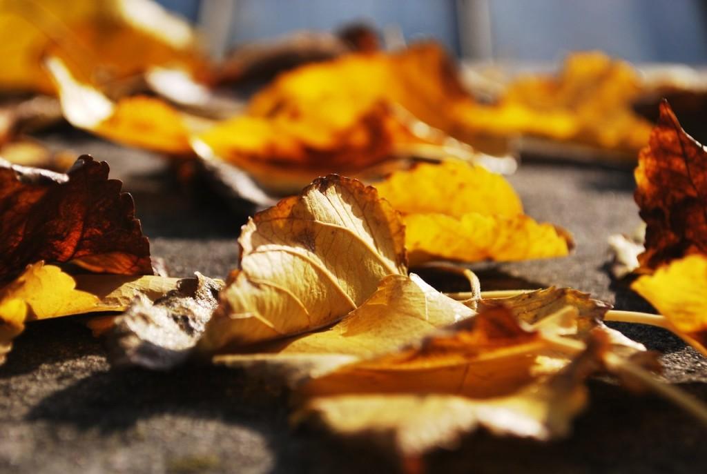 Leaves | © unsplash.com/Pexels