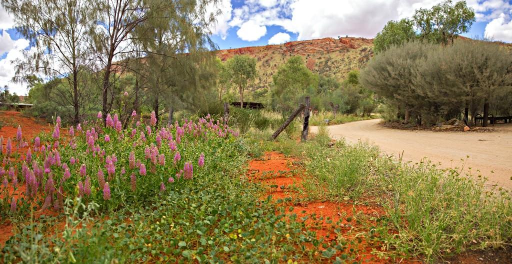 Garden | Courtesy of Alice Springs Desert Park