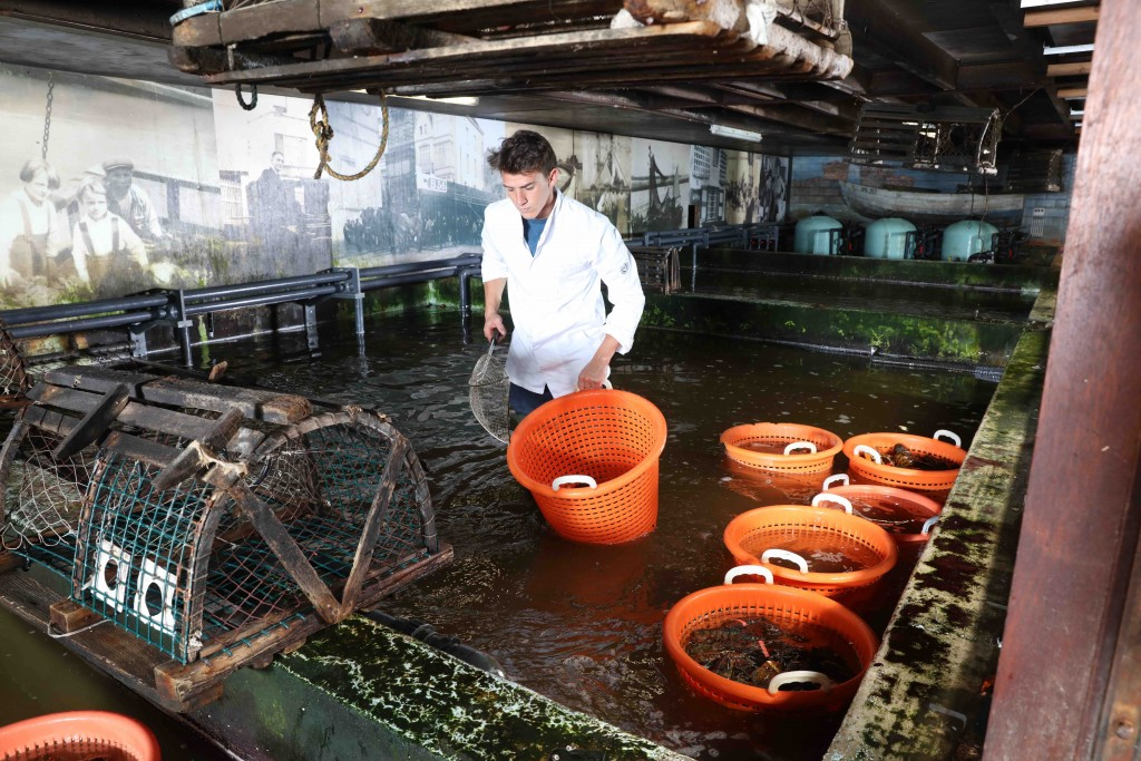 The family business has been harvesting oysters in North Sea water for well over a century | © De Oesterput