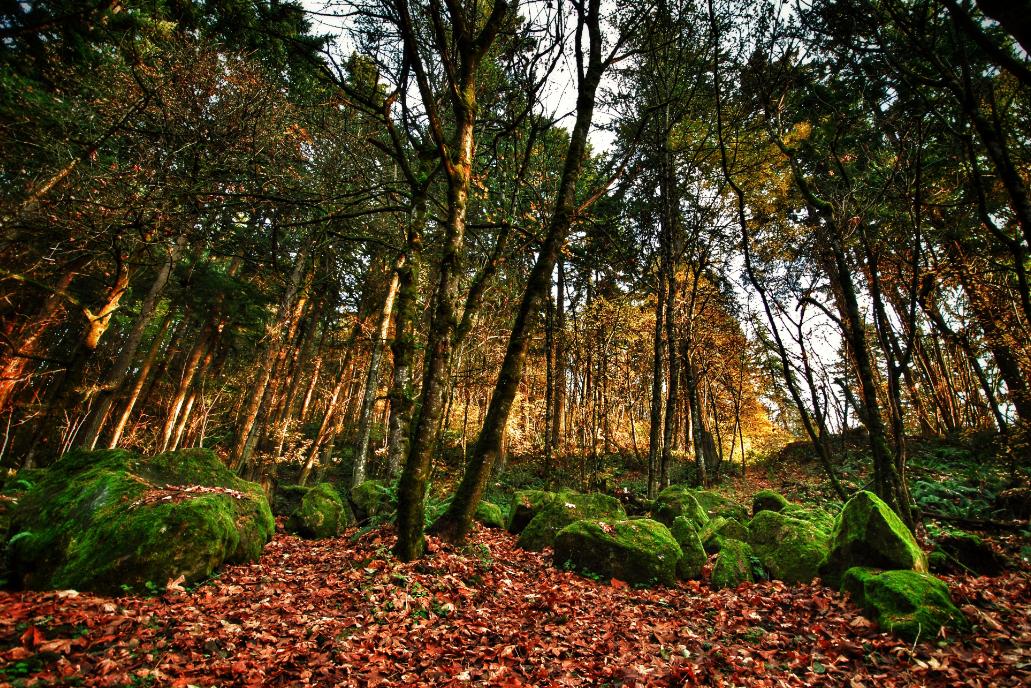 Trees in Forest Park, Portland, Oregon   © Adamneil/Good Free Photos