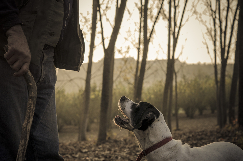 Old man with his dog searching truffle in a forest ©Giorgio1978 / Shutterstock