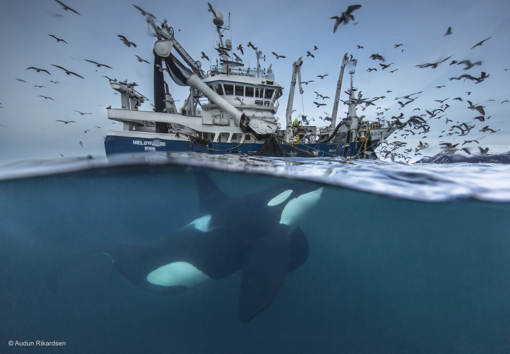 Photograph: Audun Rikardsen / Wildlife Photographer of the Year