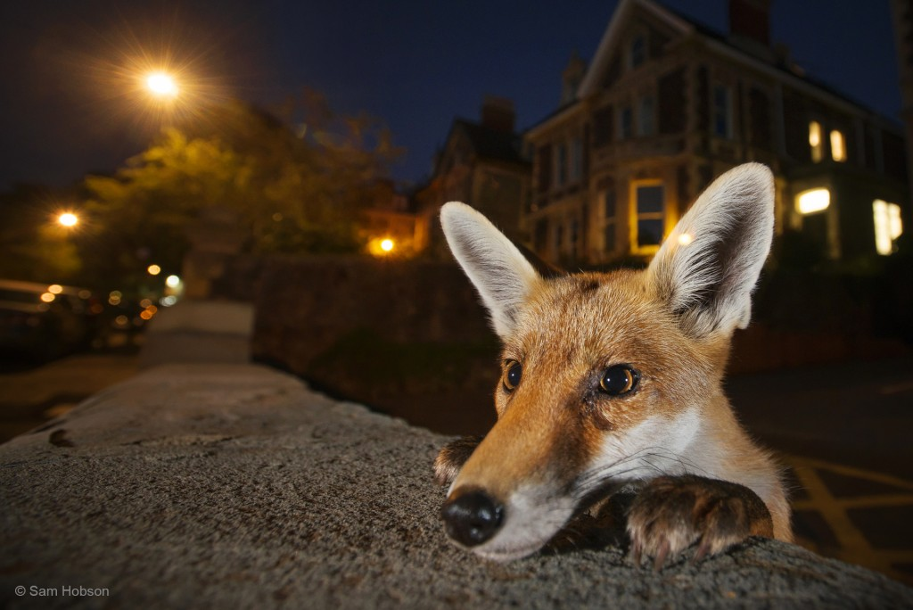 Photograph: Sam Hobson / Wildlife Photographer of the Year