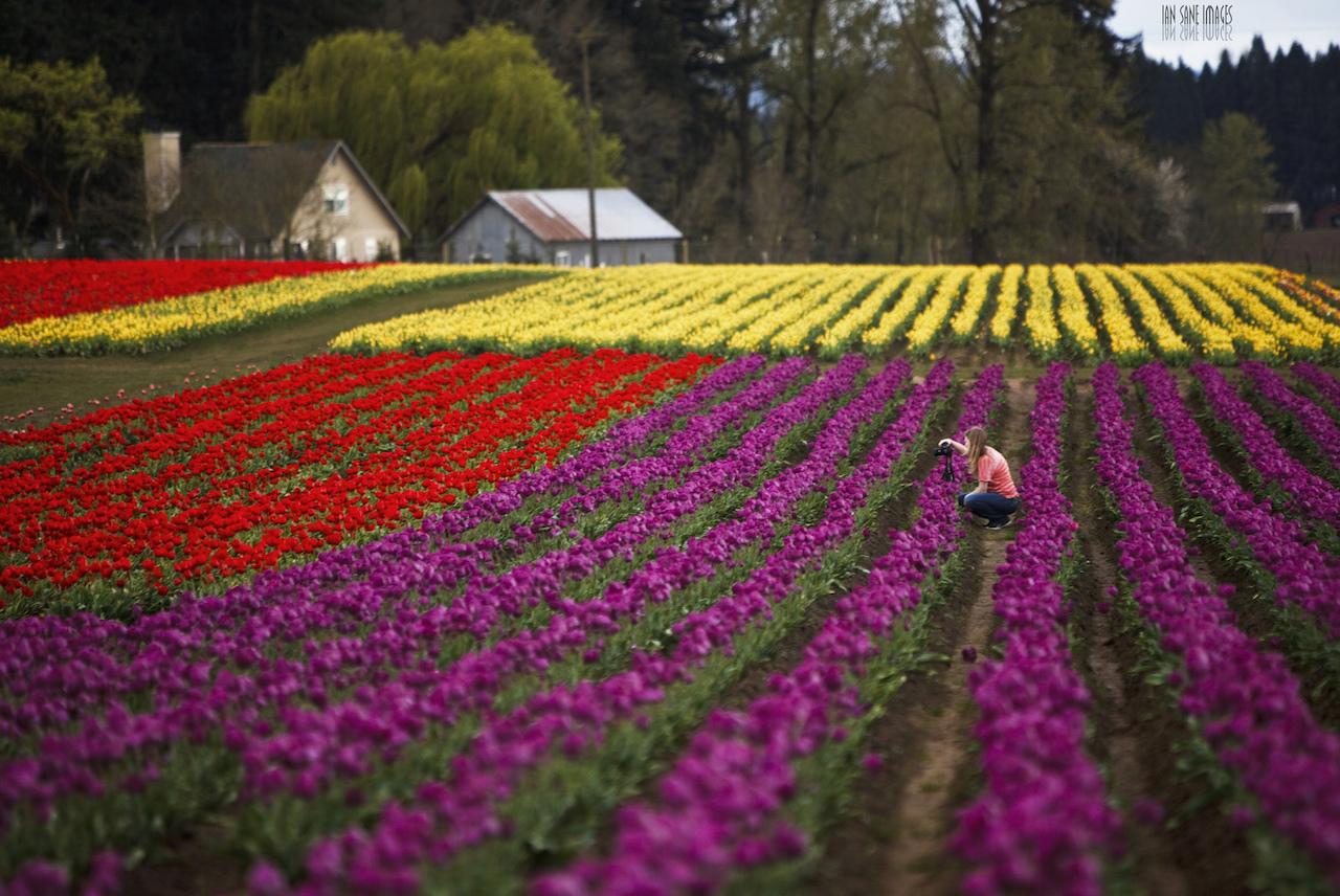 Capturing Color | © Ian Sane/Flickr