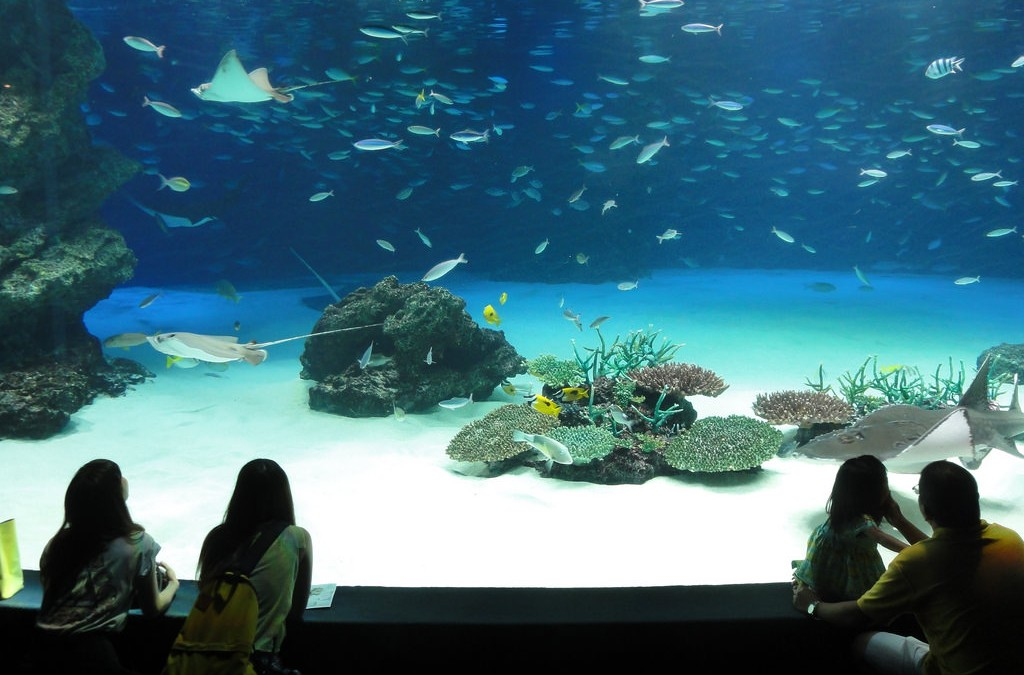 Aquarium | © Happy Come/Flickr