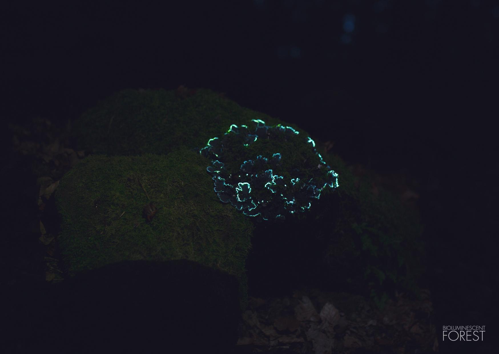 mushroom_round_03