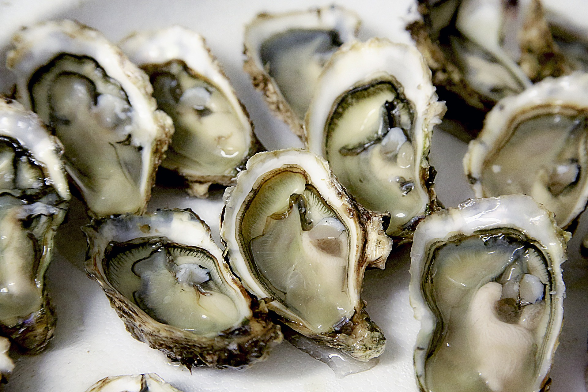 Oysters | © Pixabay