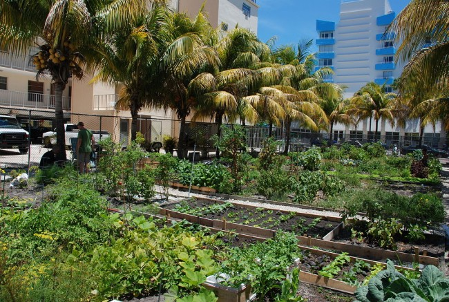 The Coolest Community Gardens In Los Angeles