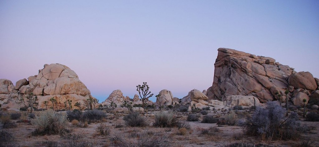 Joshua Tree National Park © Jarek Tuszyński/Wikipedia