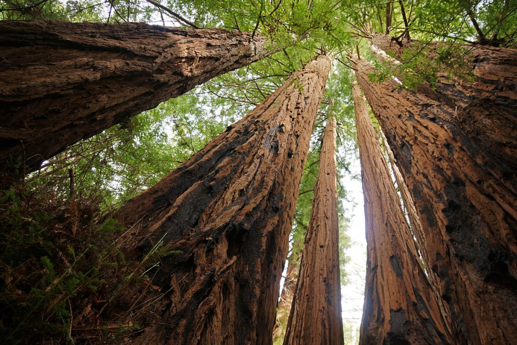 Big Basin Redwoods State Park © Allie_Caulfield/Wikipedia