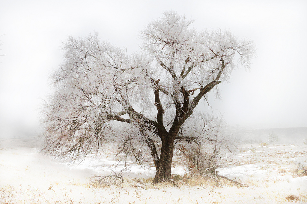 In The Bleak Midwinter | © Larry Smith/Flickr