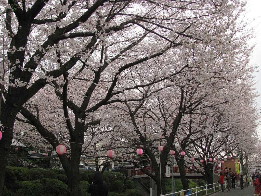 Roppongi Sakurazaka | © Aimaimyi/WikiCommons