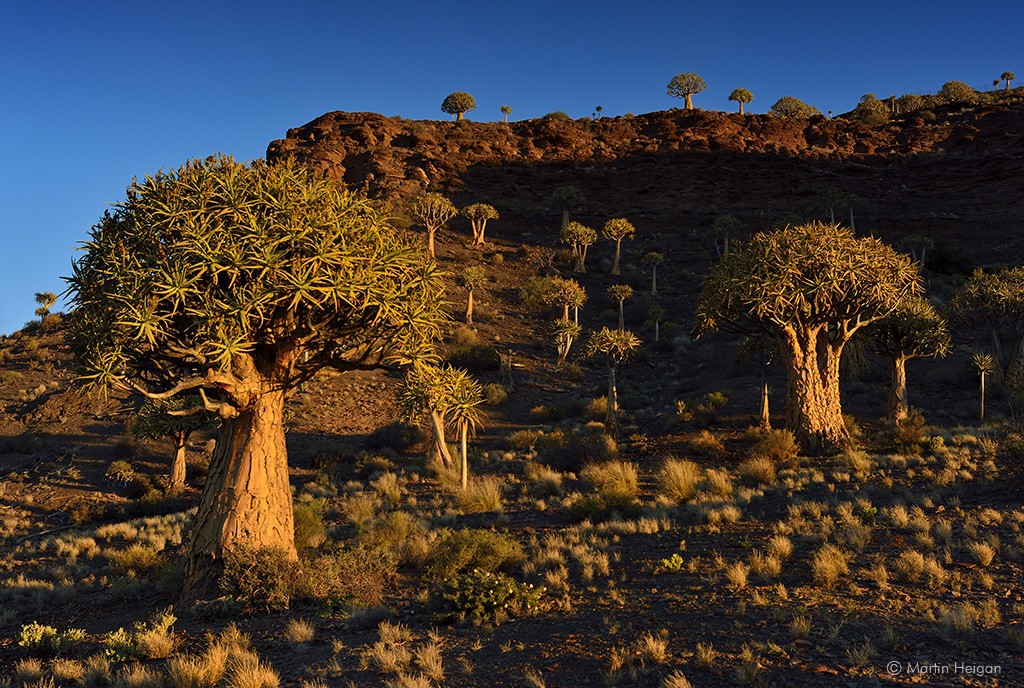 Quiver Tree Forest, Northern Cape © Martin Heigan / Flickr
