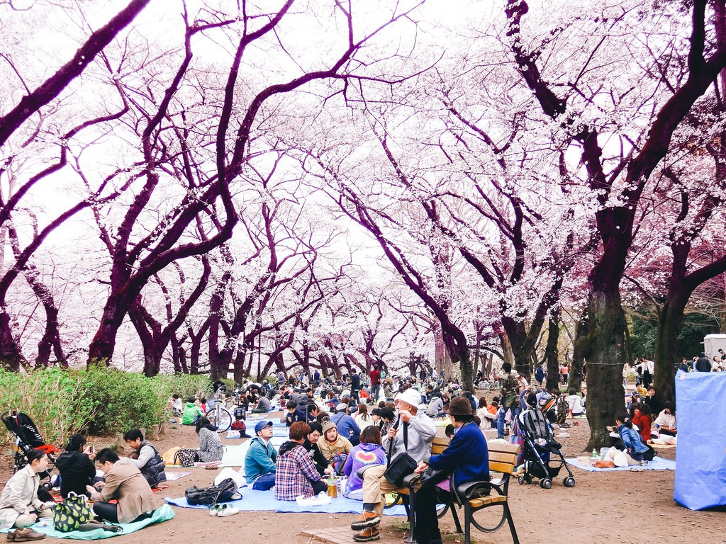 Hanami at Inokashira Park | © Dick Thomas Johnson/Flickr