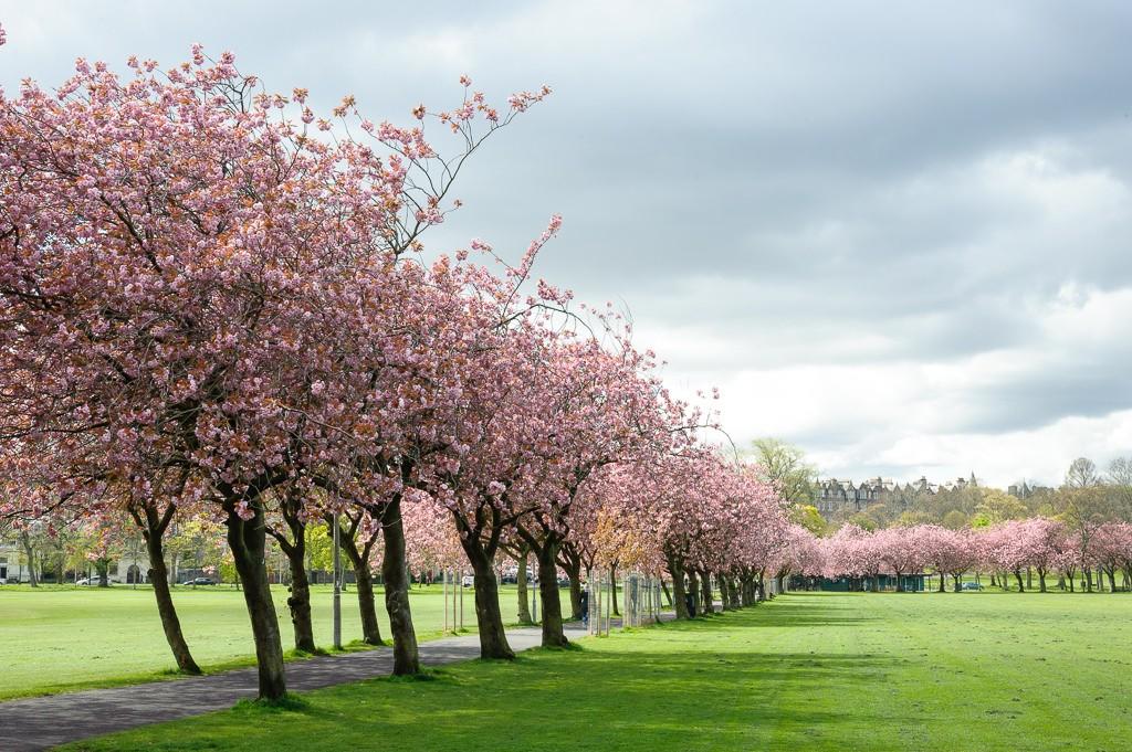 The Meadows   © Michal Ziembicki/Flickr
