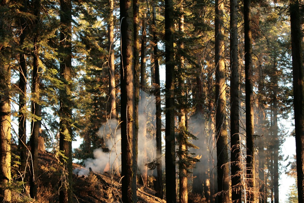 Mariposa Grove © Robin Corps/Flickr