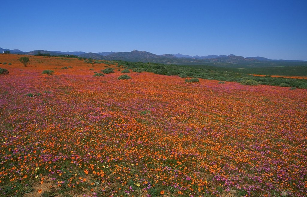 Namaqualand National Park, Northern Cape © Malcolm Manners / Flickr