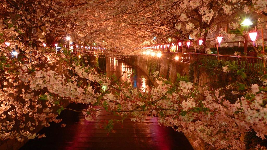 Sakura along Meguro River in Nakameguro | © saotin/Flickr