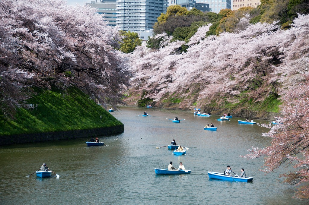 Chidorigafuchi Moat during cherry blossom season | © kanegen/Flickr