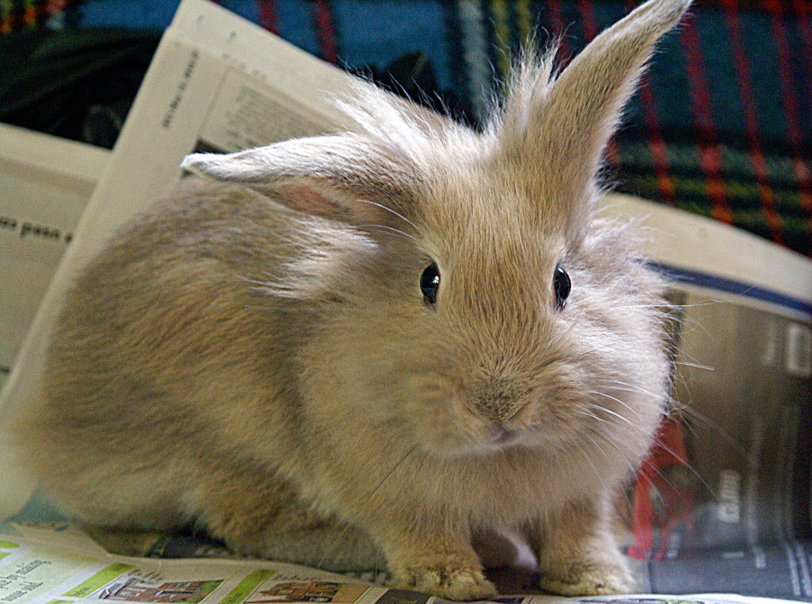 Ms Bunny has lots of rare rabbit breeds | © Sarah/Flickr