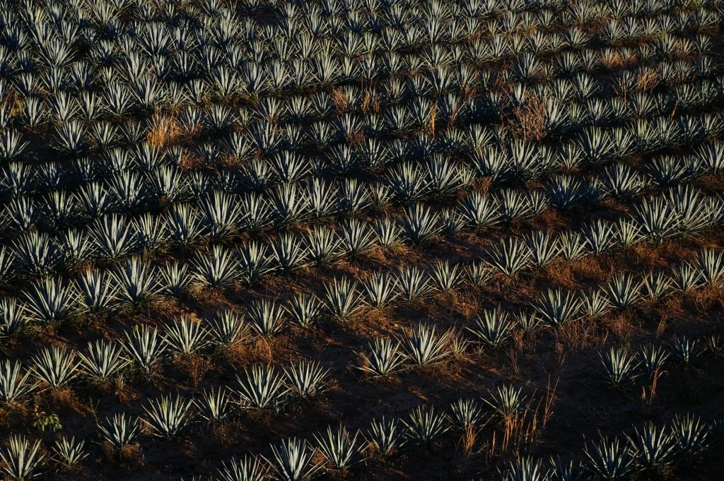 Tequila, Jalisco | © Thomassin Mickaël