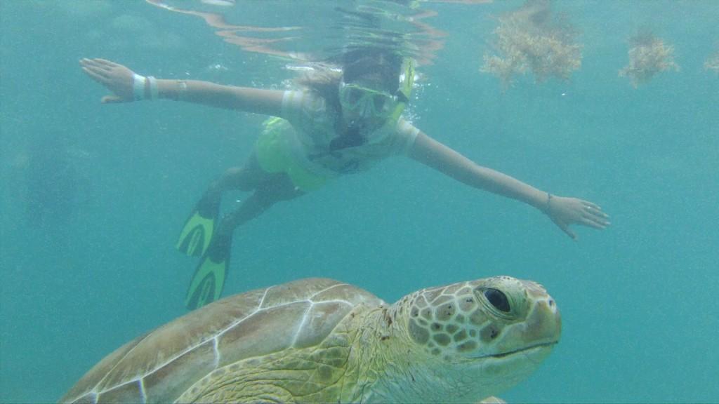 Turtles in Akumal│ © pauljoelhancock/Flickr