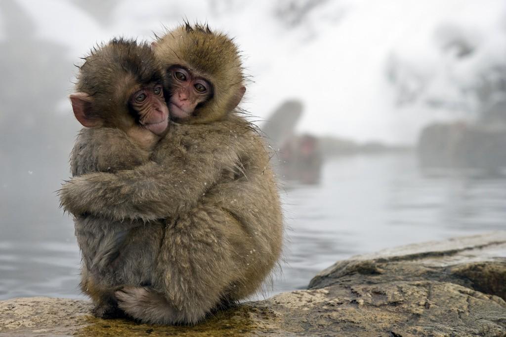 Снежные обезьяны |  © SITS Girls / Flickr
