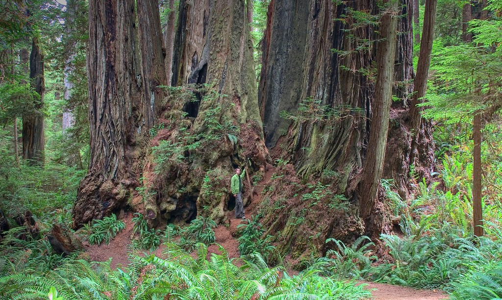 Prairie Creek Redwoods State Park © rachel_thecat/Wikipedia