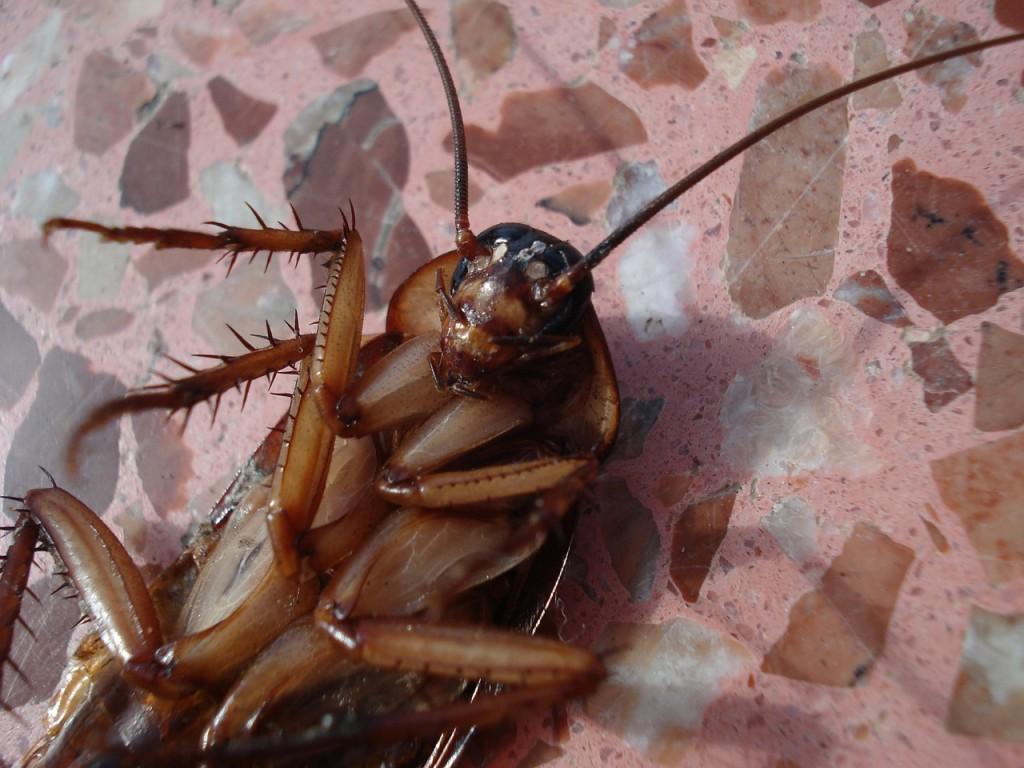 Depressed cockroach │© beeki-thecoffeedrinker