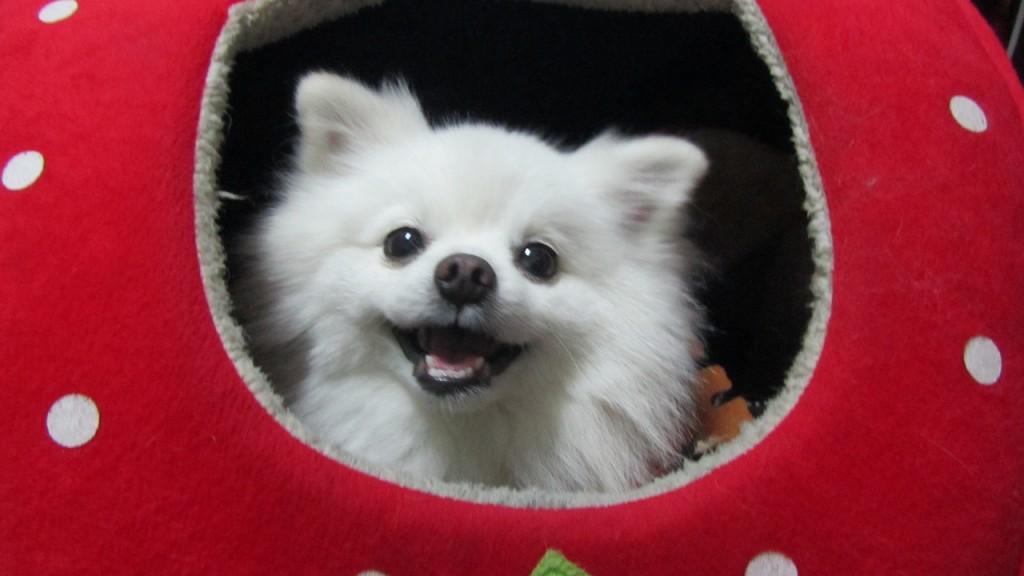 Happy dog │© sun09607167970
