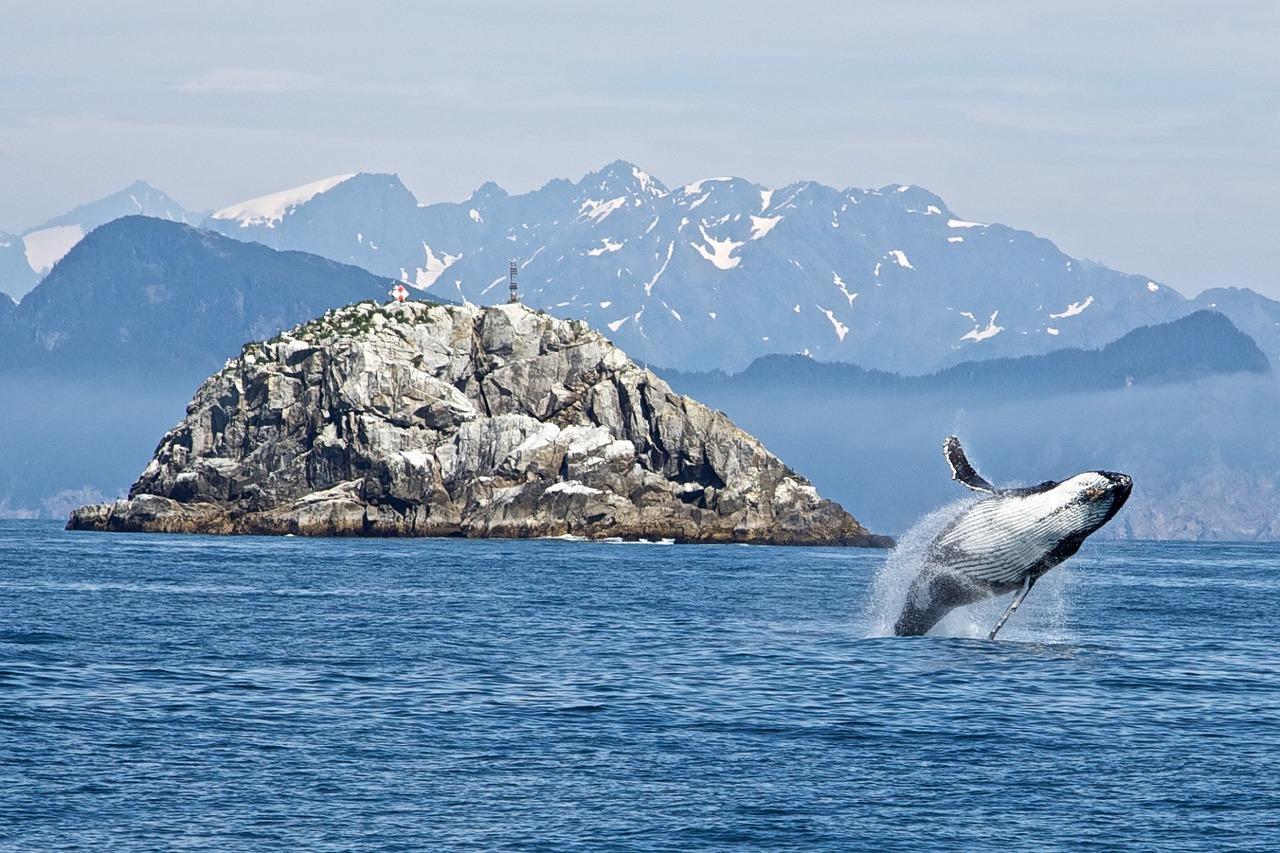 Whale Jump © Skeeze/Pixabay