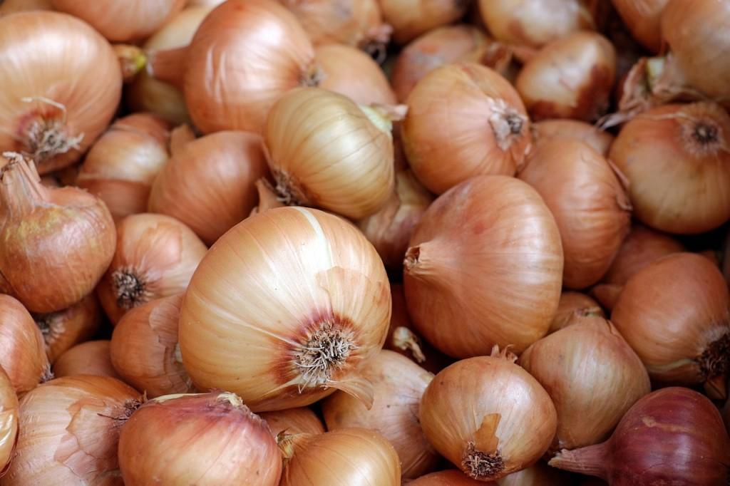 Onions │© Couleur