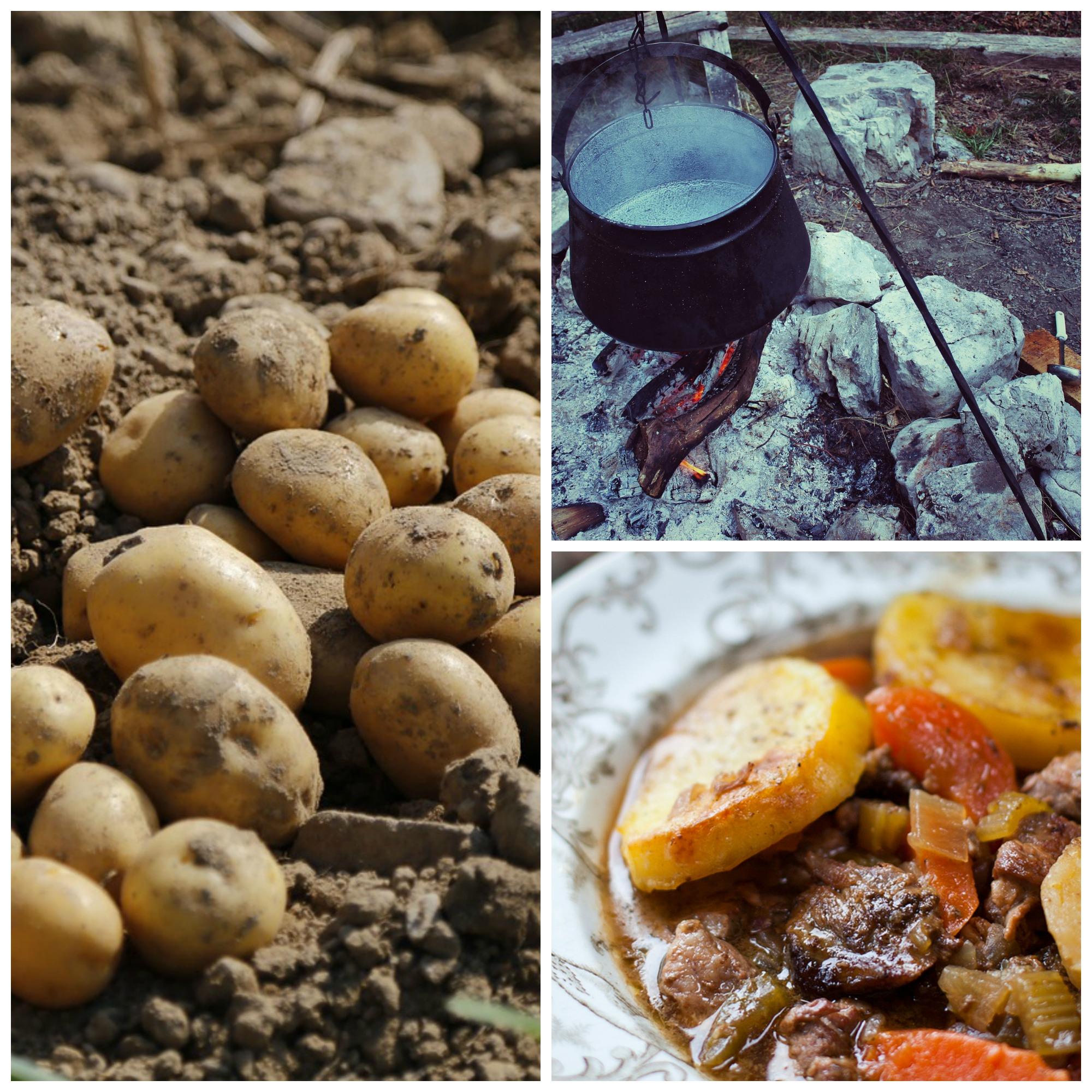 Harvested potatoes | © Jai79/Pixabay / Hanging pot | © Waldo93/Pixabay / Irish stew | Courtesy of DonalSkehan.com