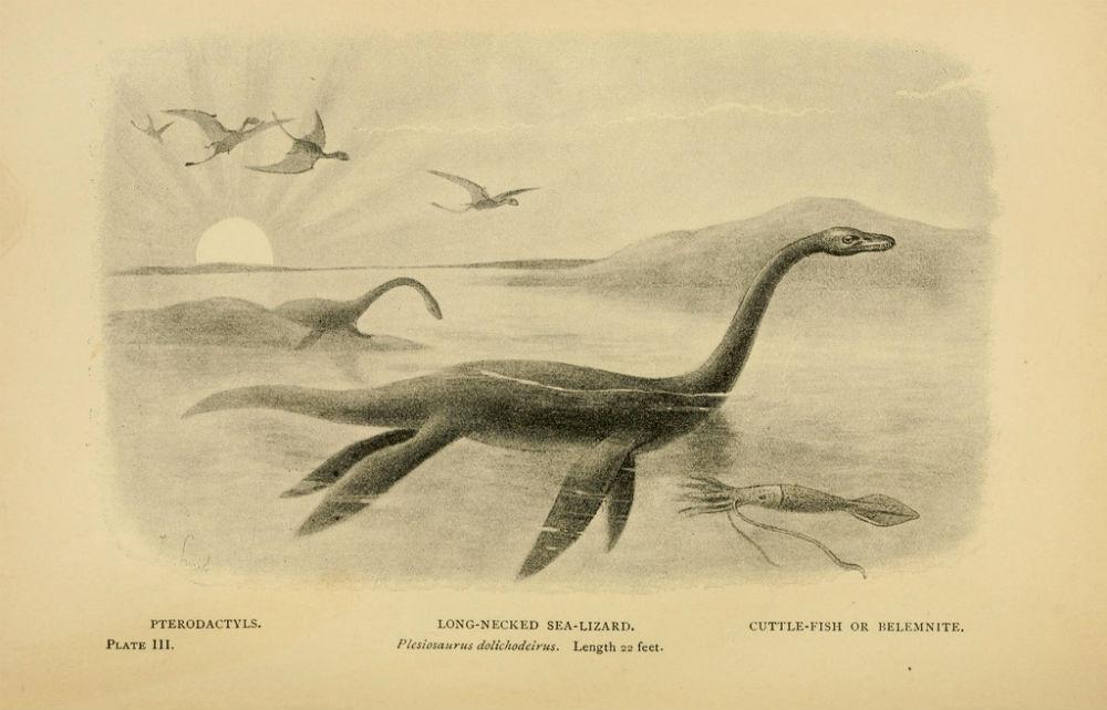 Plesiosaurus | © Biodiversity Heritage Library/Flickr