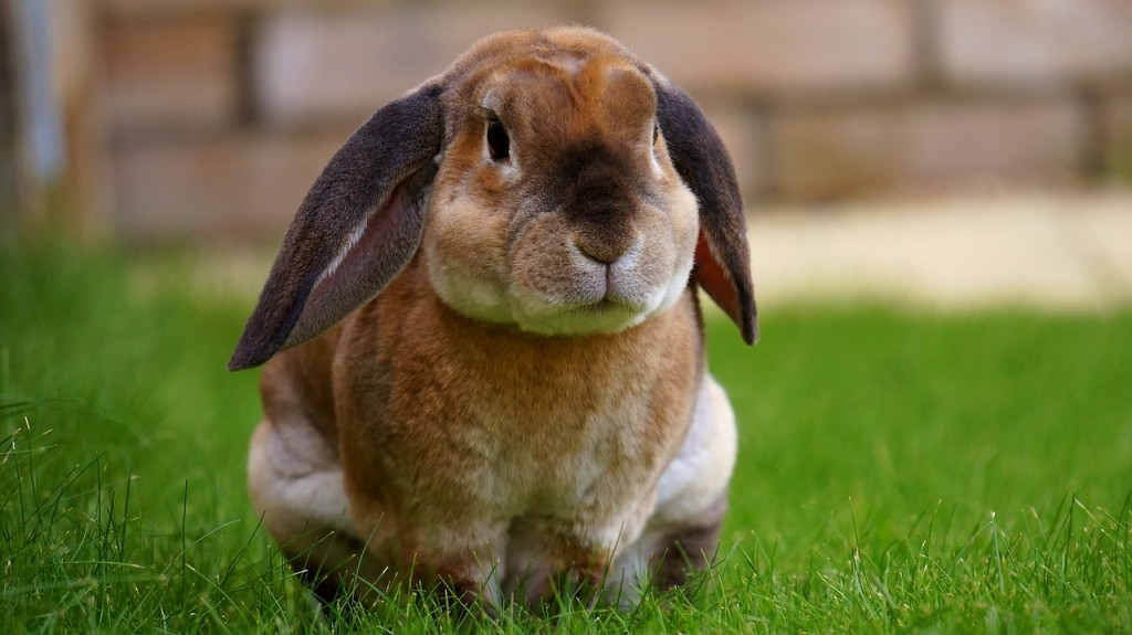 Rabbit │© MikeBird