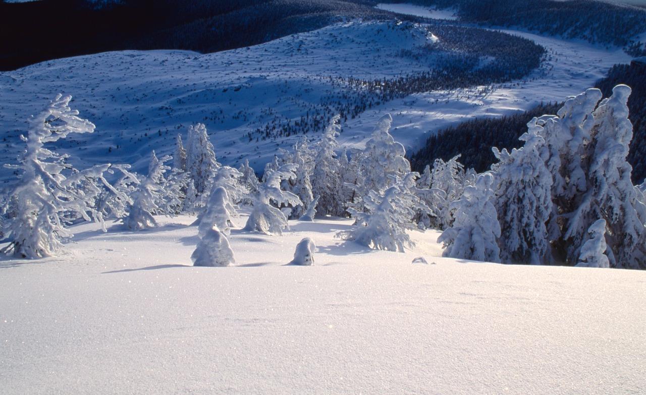 Deschutes National Forest | Public Domain/Pixabay