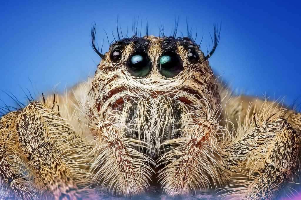 Spider │© ROverhate