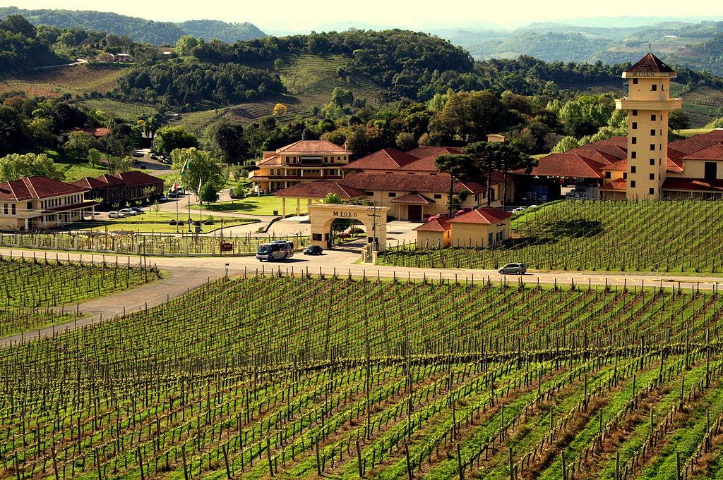 Vinhas em Bento Gonçalves | © lethaargic / WikiCommons