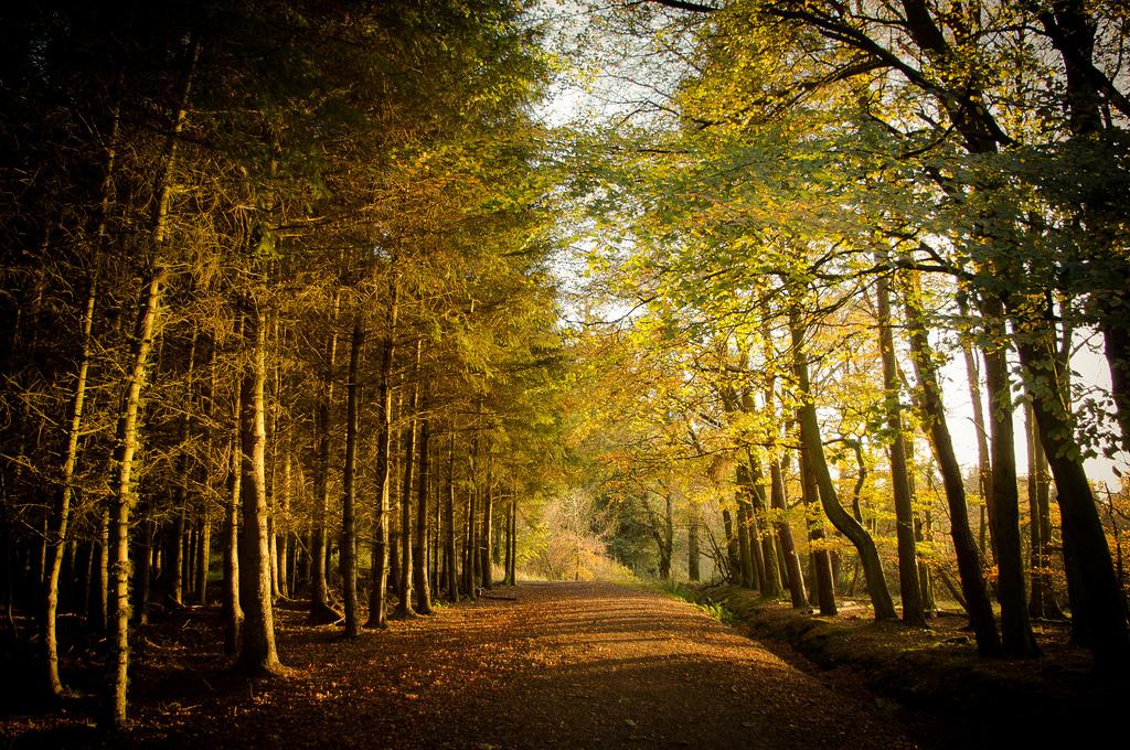 Autumn Trail | © Neil Williamson/Flickr
