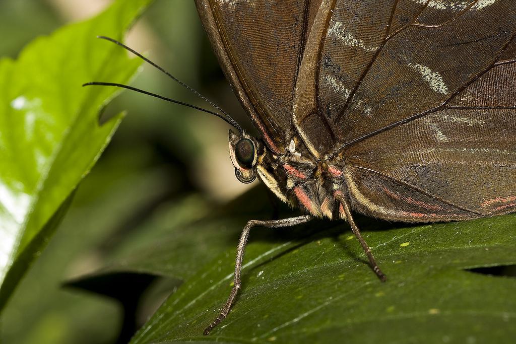 Butterfly World In Dalkeith | © Neil Henderson/Flickr