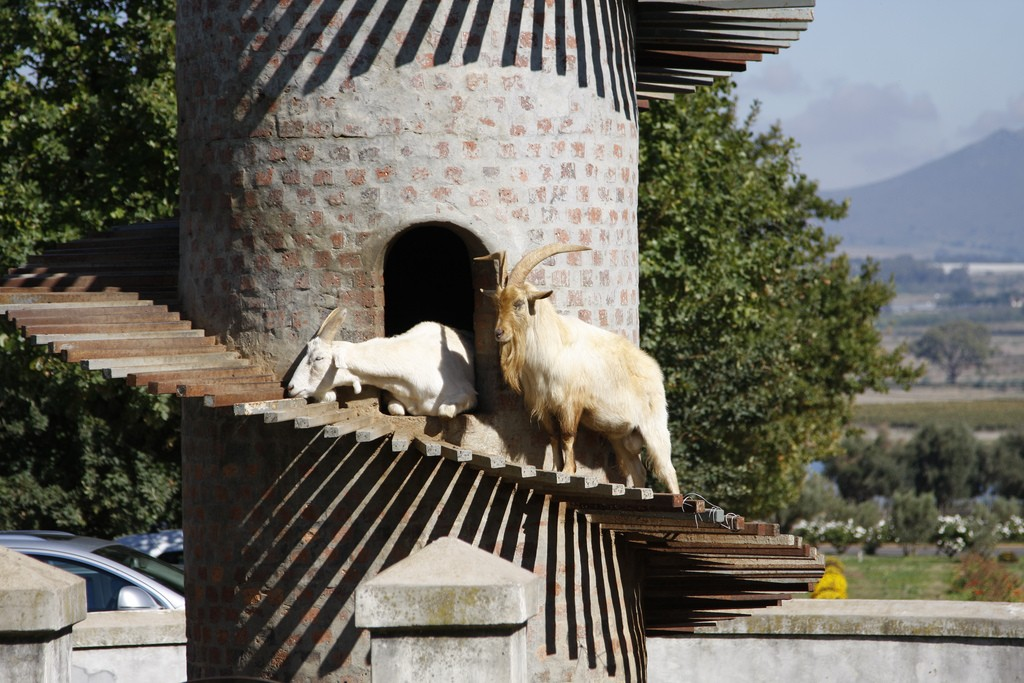 Goat Tower, Fairview Cheese and Wine Farm, Paarl © Peter Borcherds/Flickr