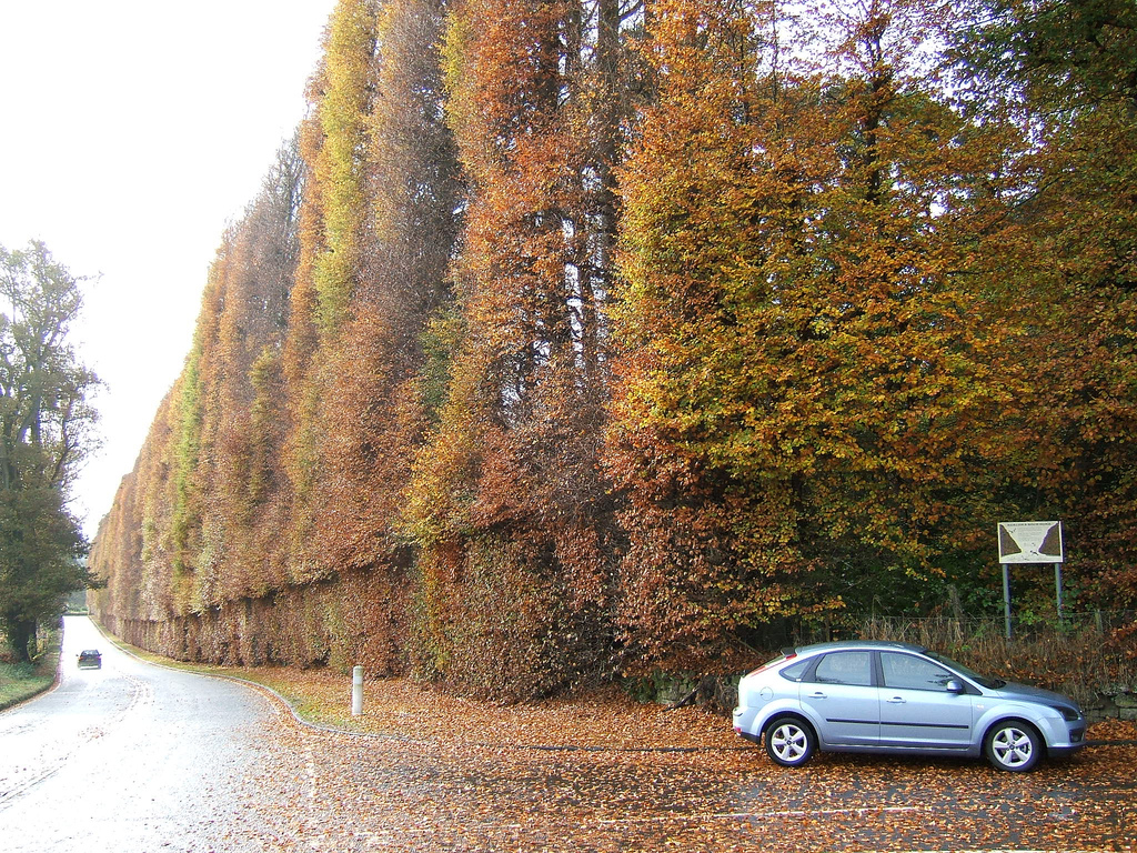 Meikleour Beech Hedge | © LHOON/Flickr