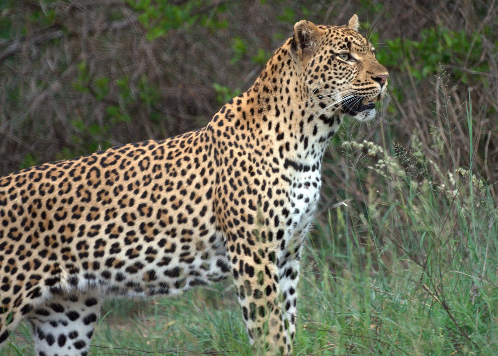 africa animals south native birds leopard must awesome mike flickr