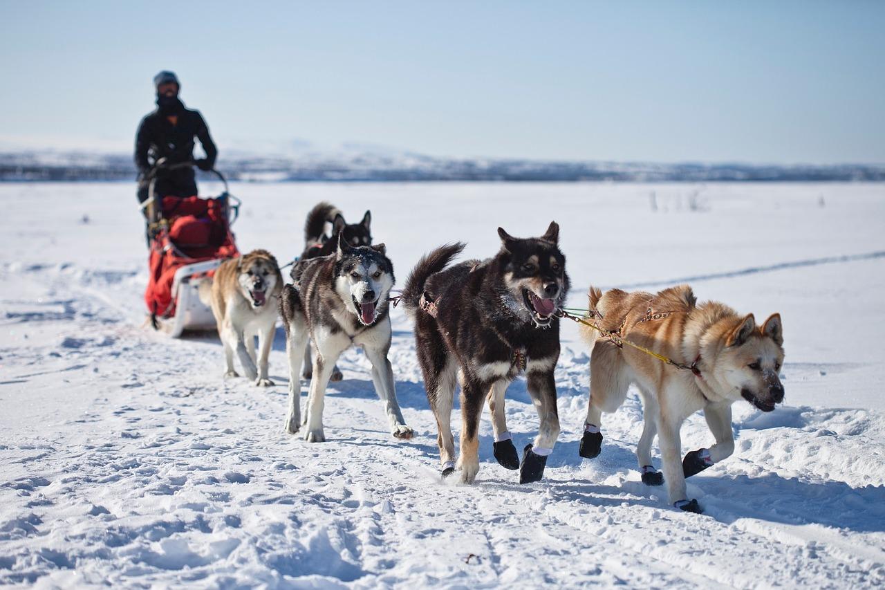 where to go dog sledding in the usa