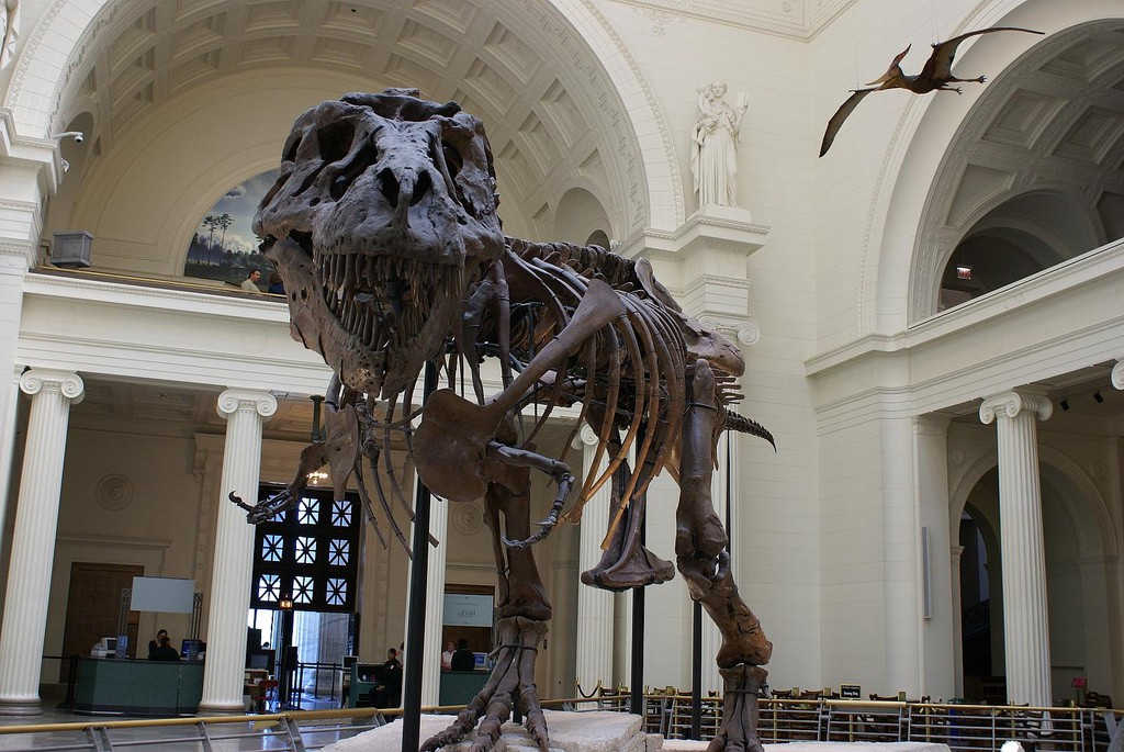 T-Rex fossil at the Field Museum | © WikiCommons
