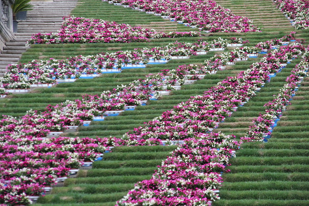 Thumbnail for Why You Should Go to the Girona Flower Festival in 2017