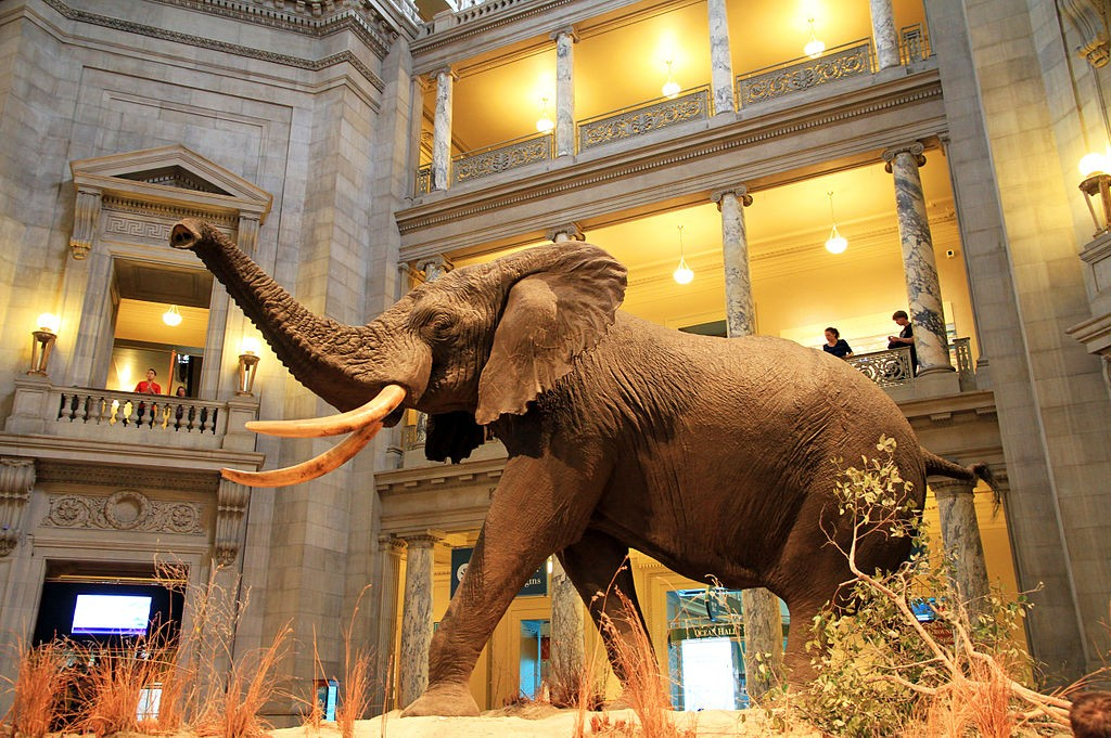 The Museum of Natural History | By Ingfbruno (Own work) [CC BY-SA 3.0 (http://creativecommons.org/licenses/by-sa/3.0)], via Wikimedia Commons