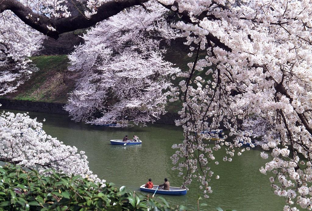 Chidori-ga-fuchi   © shuzo serikawa/Flickr